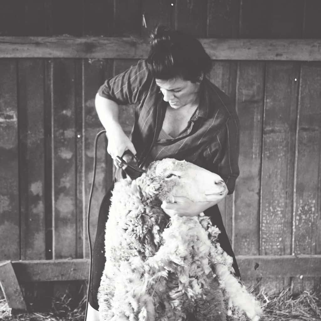 Sabrina shearing Cestari Sheep & Wool Co