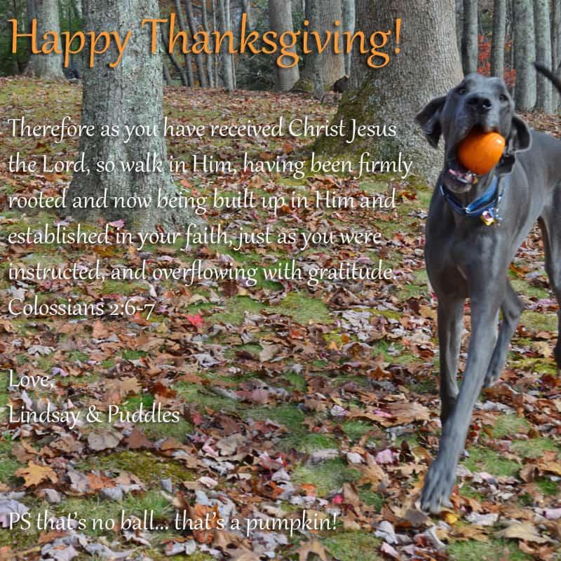 Thanksgiving Puddles