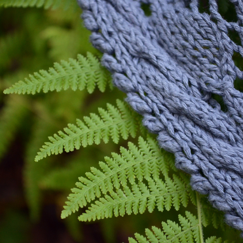 Boscage edge fern edge close up
