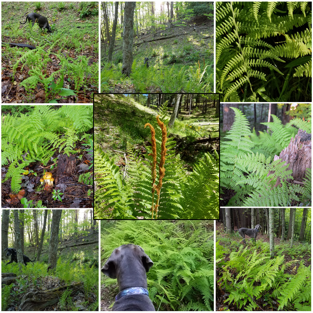fern around the mountains with Puddles collage