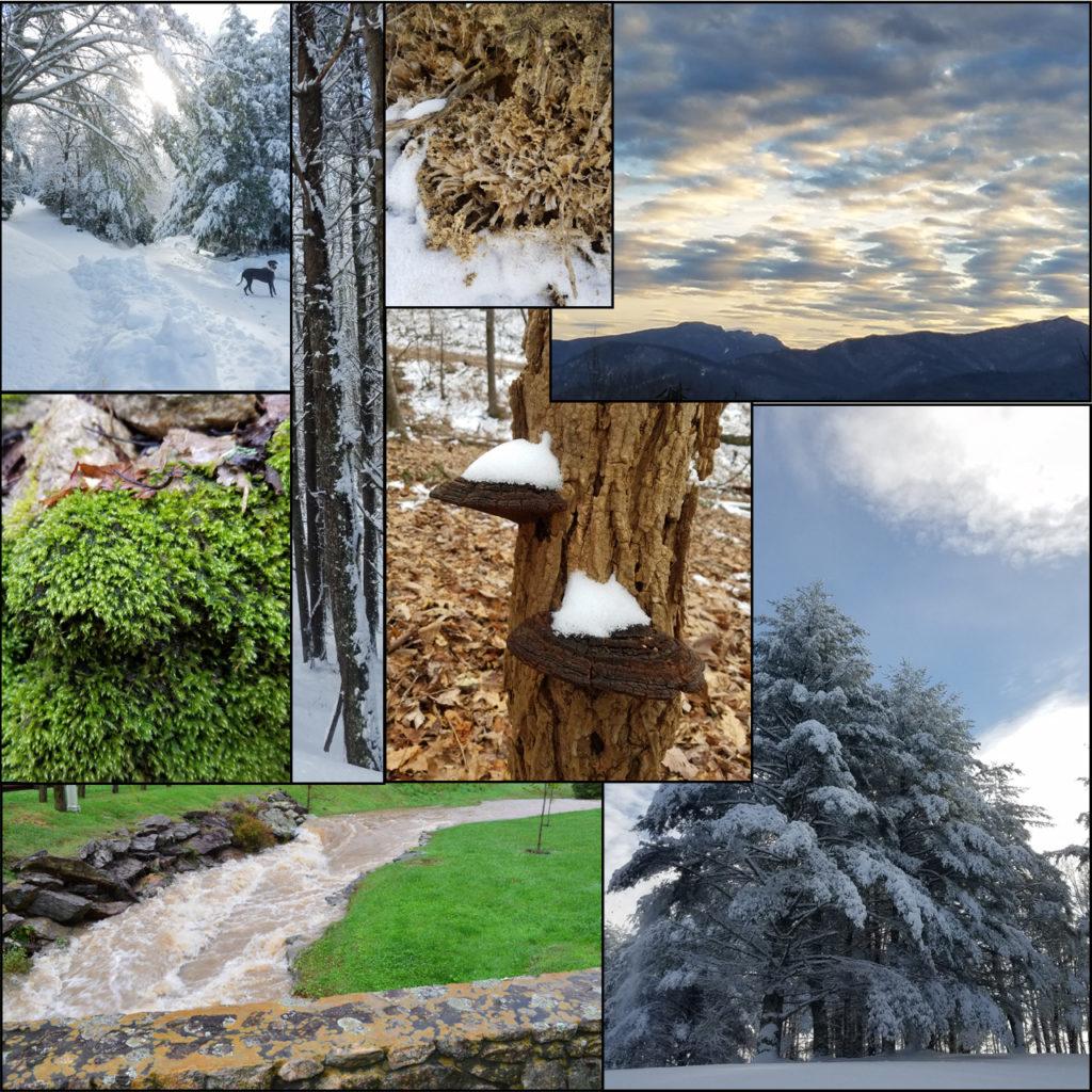 Eco Elements collage